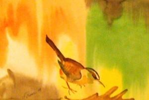 "Carolina Wren:  Watercolor (12""x16"")  Original:  Jeff & Alison Schuler (Cincinnati)"